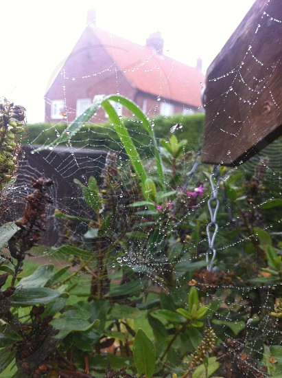 countrysidecobweb photo