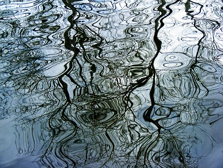 Reflection of bare tree branches in water photo