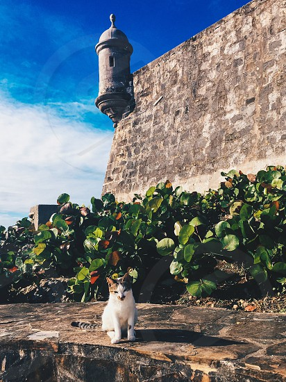 #cat#castle#kitty#puerterico#oldsanjuan#sanjoan photo