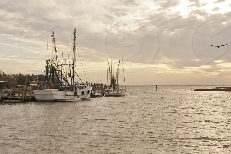 Fishing Boats 3 photo