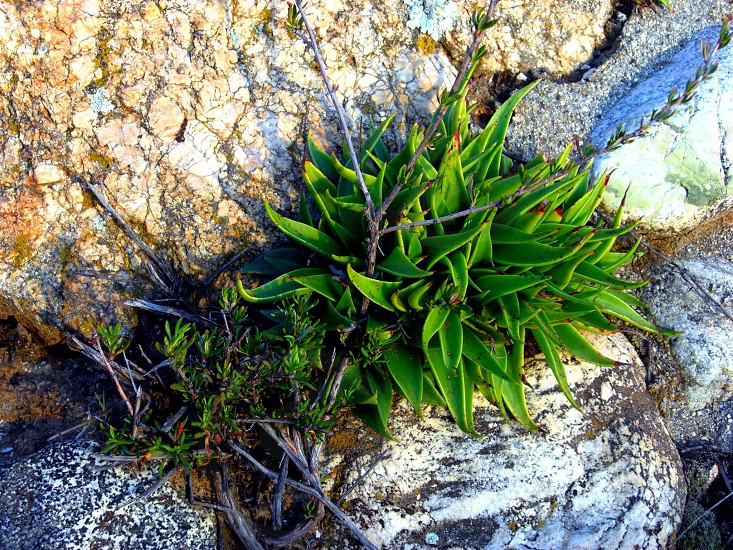 green plant in grey rocks photo