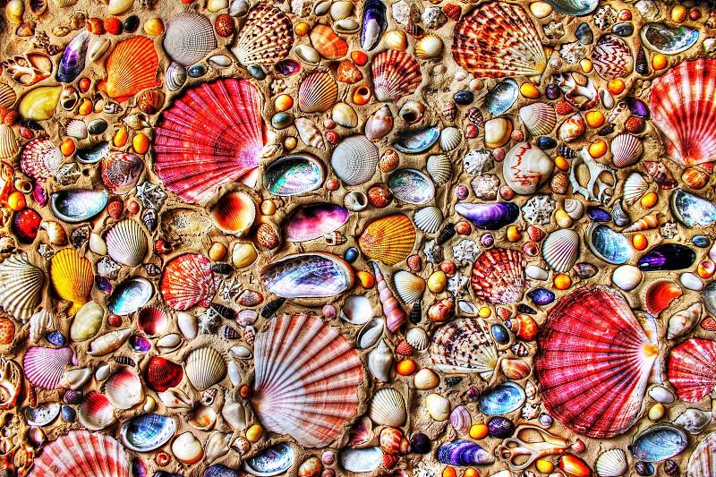 Seashellsvibrantpatterns photo