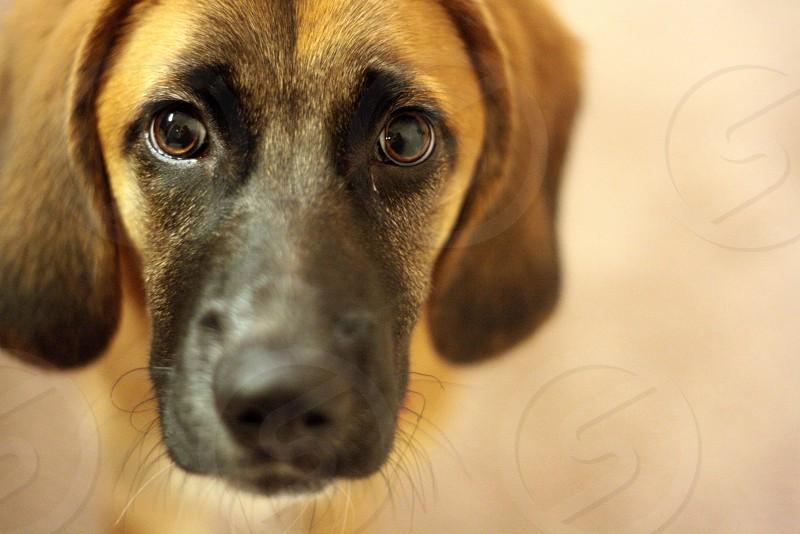 Portrait of a dog called Stewie photo