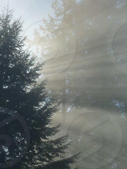 sunlight through trees and fog photo