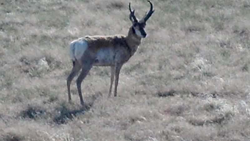 Wyoming wilderness photo