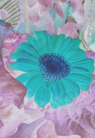 spring colors pastels invert neon pink peach blue teal aquamarine photo