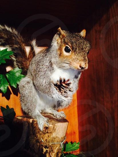 Stuffed squirrel  photo