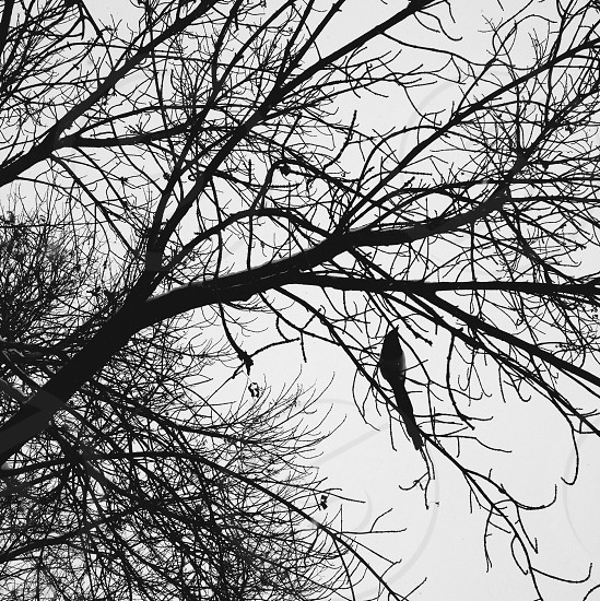 black bird on tree branch photo