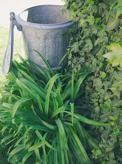 Metal Trash Can in the Garden Closeup photo