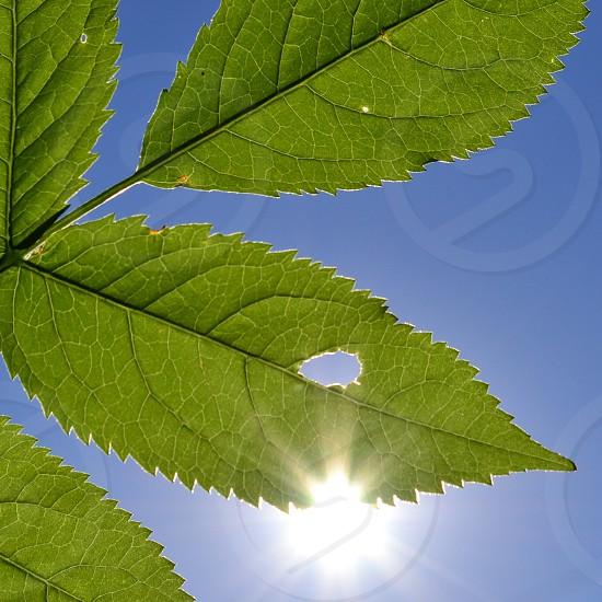 green leaf image photo