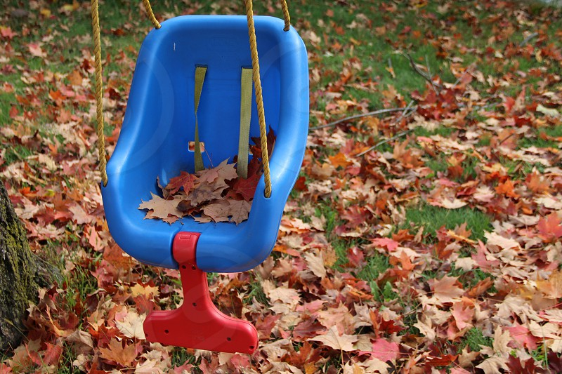 blue and red plastic hanging chair over dried leaves photo