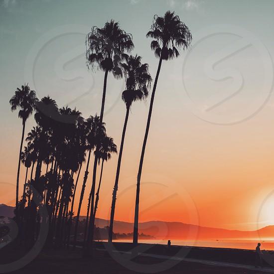 silhouette of palm trees on beach shore near ocean water under orange sunset photo