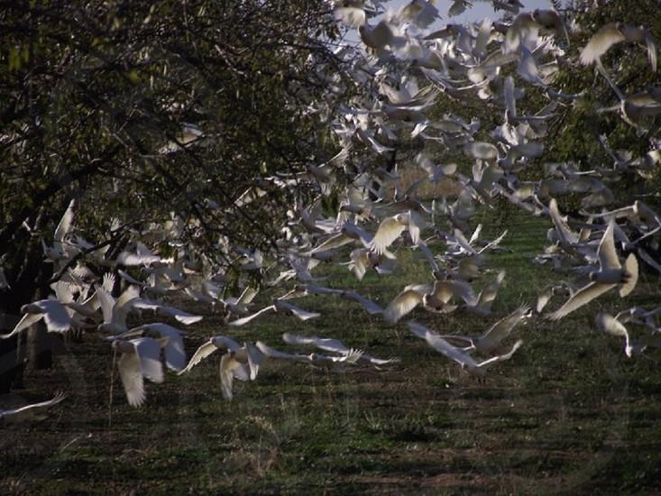 Birds in flight. photo