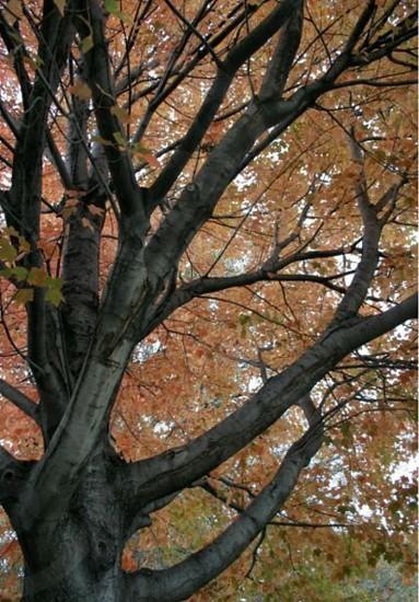 Turning Leaves photo