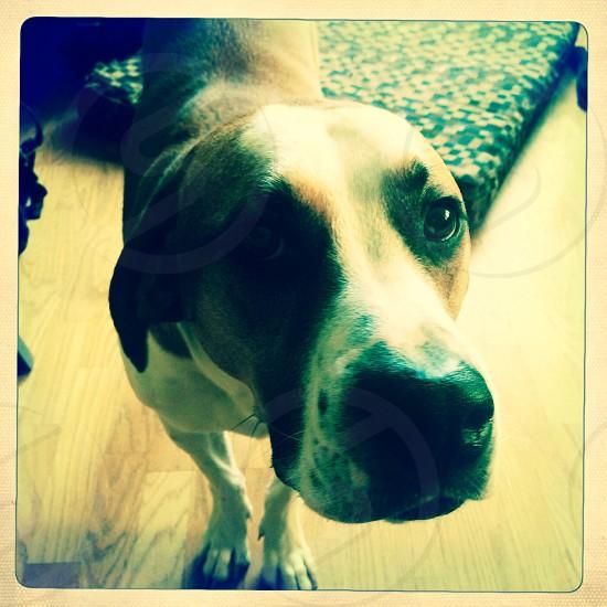 Sad puppy photo