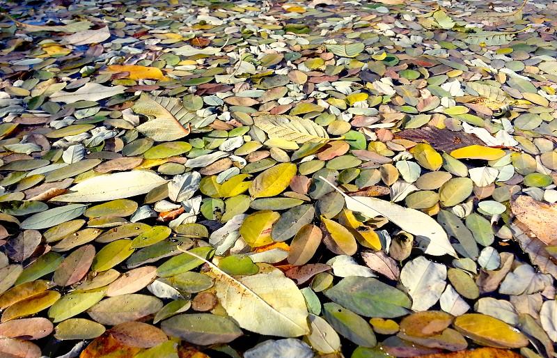 Fall pool on the Yakima River Washington. photo