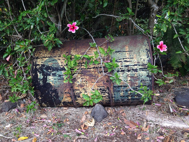 Treasure chest with flowers in Hawaii.  photo