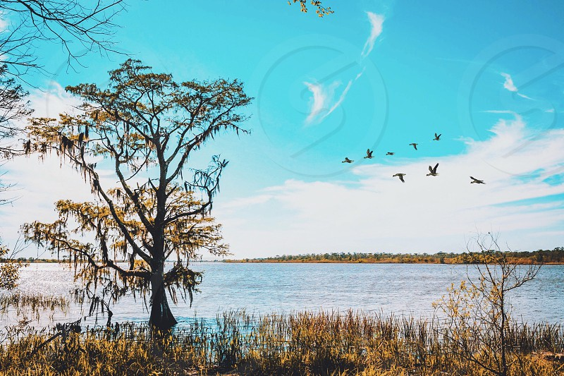 Blakely state park alabama mobile river river water Spanish fort nature birds outdoors tree photo