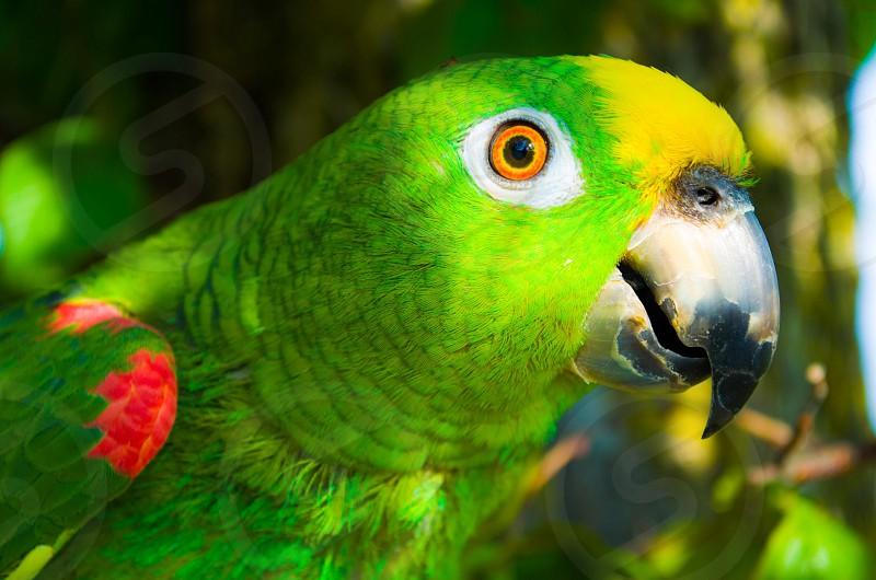 shallow focus of green bird photo