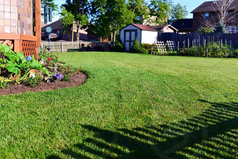 green grass backyard photo