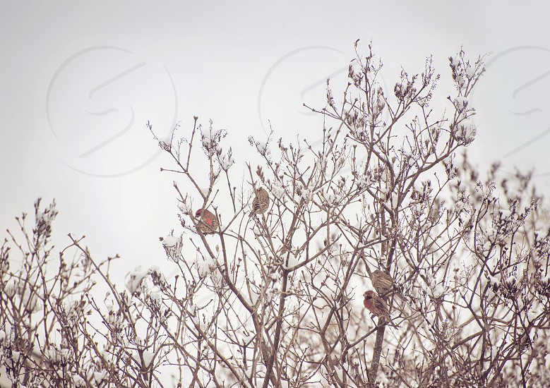 Group of birds in a tree in winter. photo