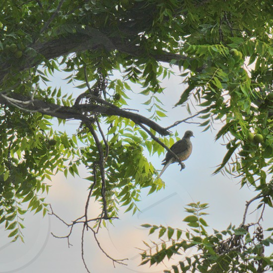 gray bird on tree branch photo