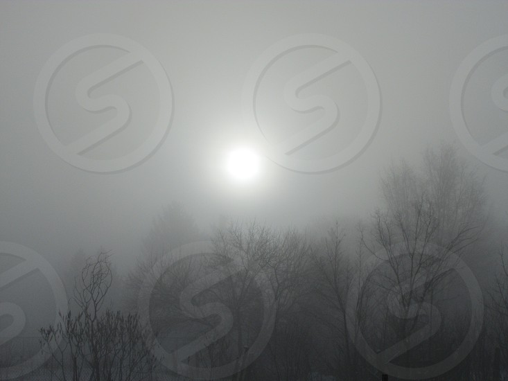 A sunrise on a winter morning depicting fog and trees in farm country.  photo