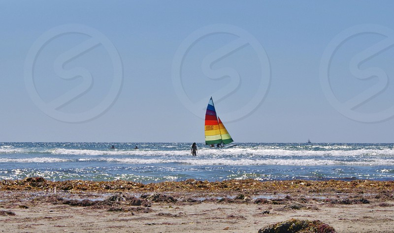 San Diego California ocean coast beach seaweed  photo