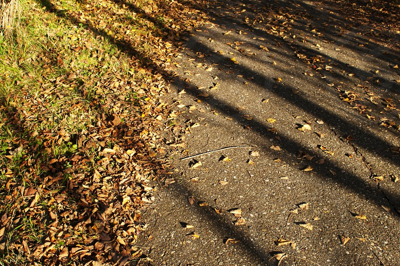 golden sunlight and shadow in fall photo