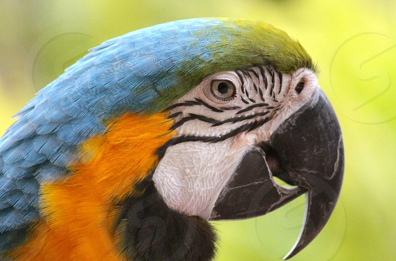 green yellow and blue macaw bird during daytime photo