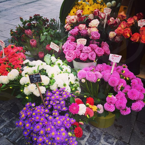 Flowers Munich blooms photo