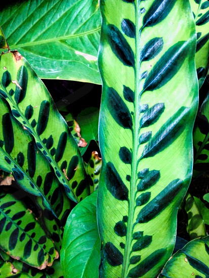 Tropical Greens photo