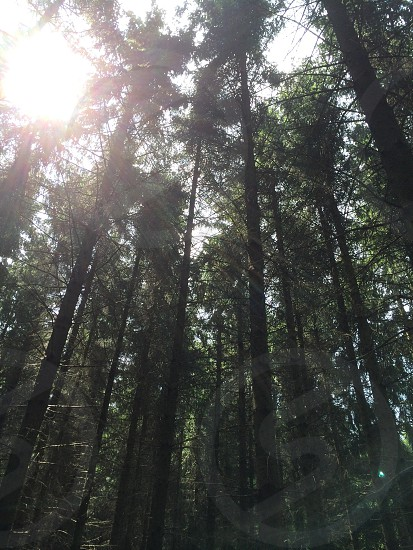 Sunshine through the woods of Foy Belgium  photo
