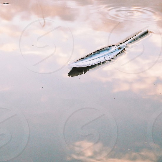 feather floating on a water surface photo