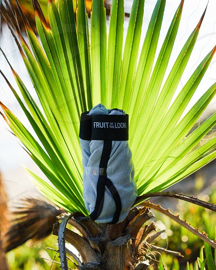 fruit of the loom grey textile beside green fan palm plant photo