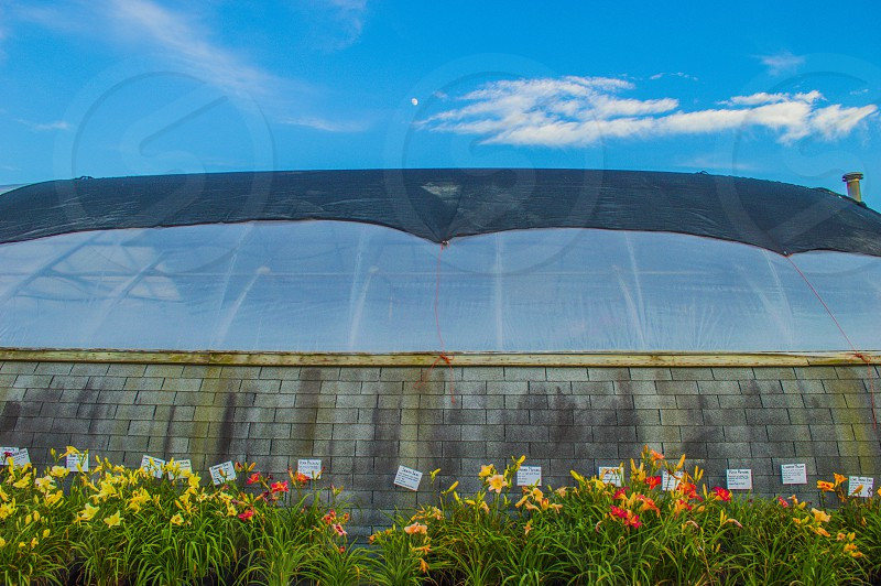 Greenhouse flowers moon photo