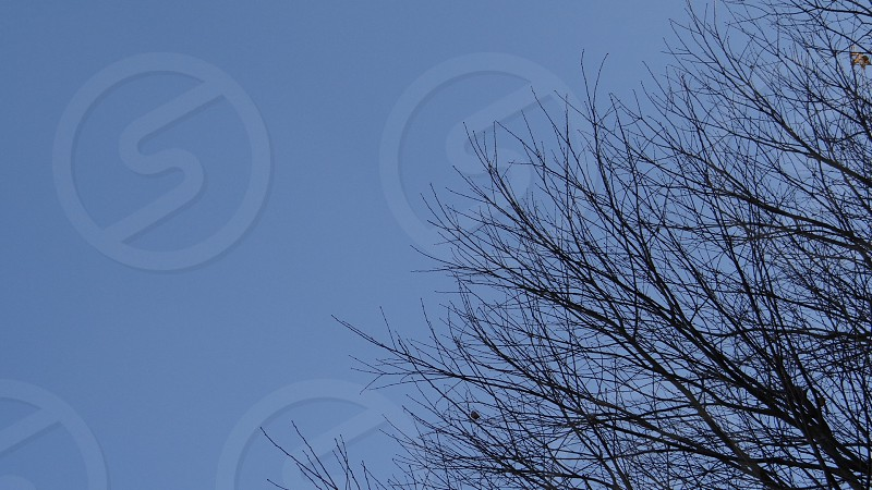 leafless tree under a blue cloudless sky photo