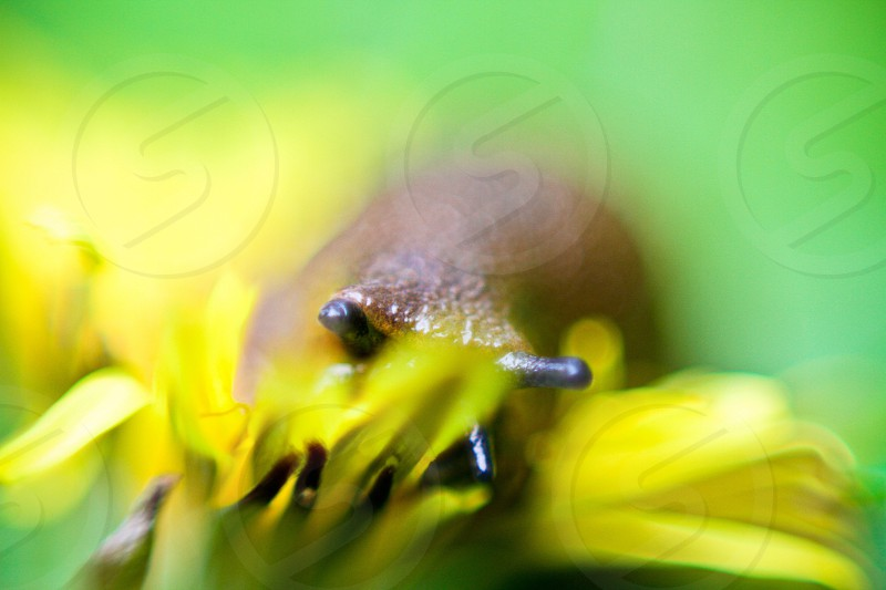 brown snail on yellow petaled flower photo