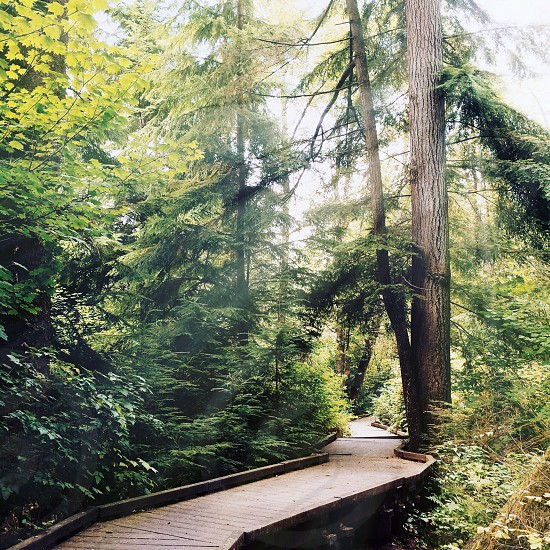 brown wooden bridge by the trees photo
