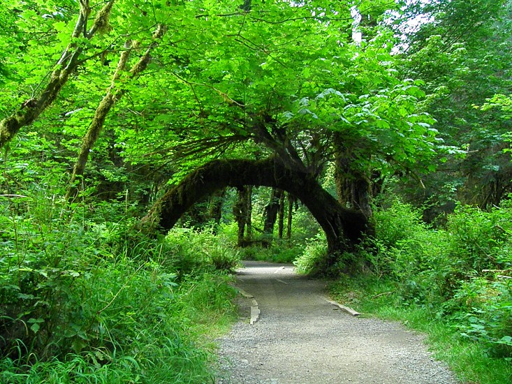 Hoh rainforest natural archway. photo