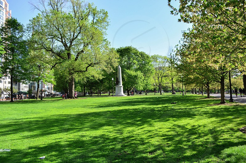 green grass in park photo