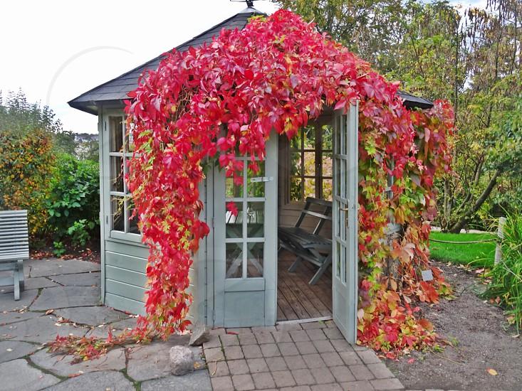 autumn fall leaves house nature garden photo