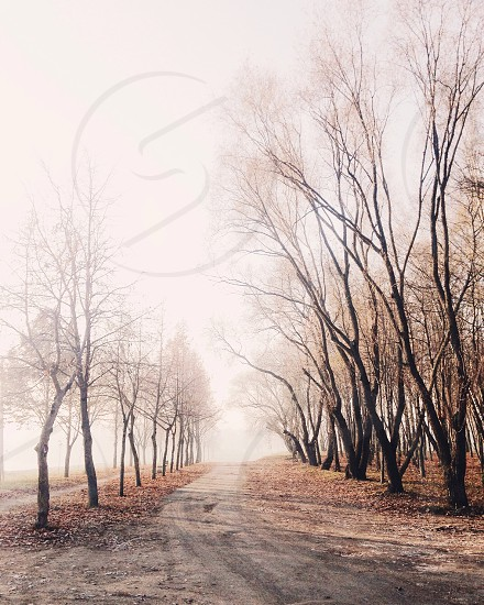 bare trees with leaves on ground photo