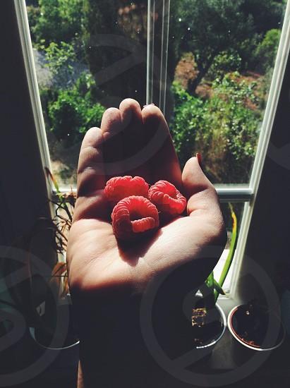 person holding 3 raspberry photo