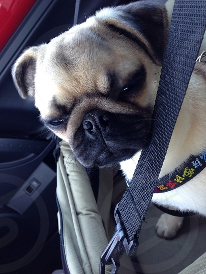 On our way home from the veterinarian. photo