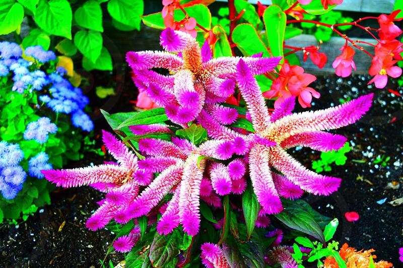 Flower vibrant bright colour photo