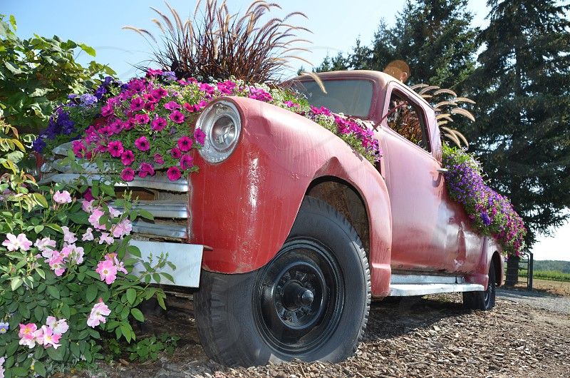Truck filled with flowers photo