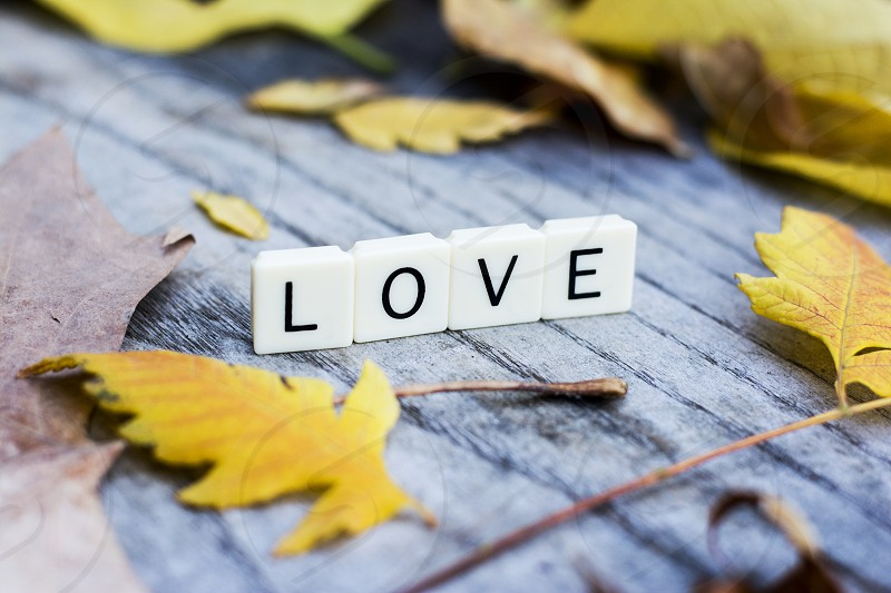 Word love made of plastic letters in autumn background photo