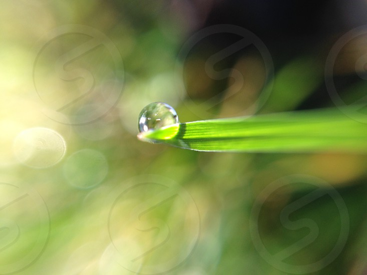 water drop on linear shaped leaf photo