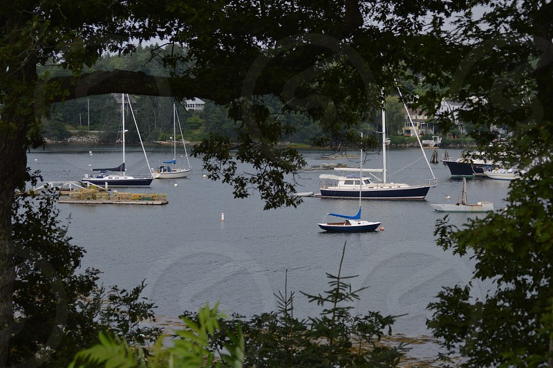 boats harbor framed by trees  photo